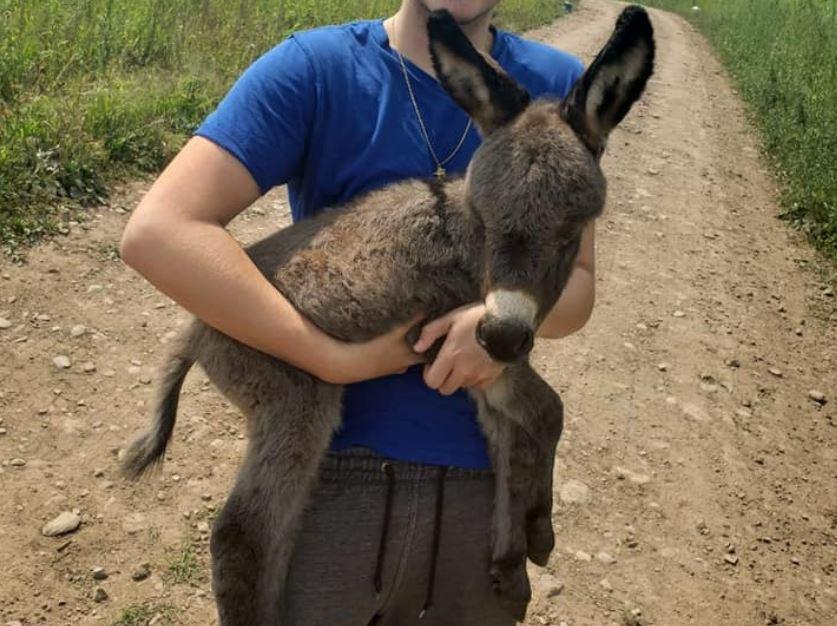 theft of donkey